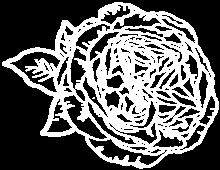 Heritage Roses in Australia logo