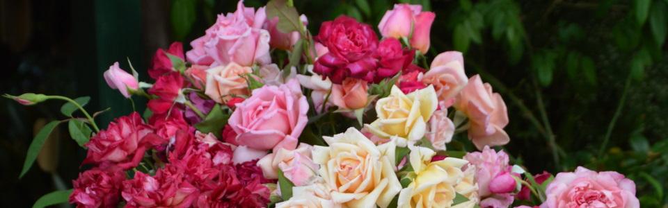 Heritage Roses in Australia