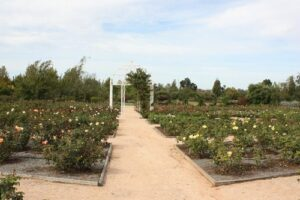 Australian Inland Botanic Garden, Mildura
