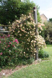 Barossa Old Rose Repository, Angaston, SA
