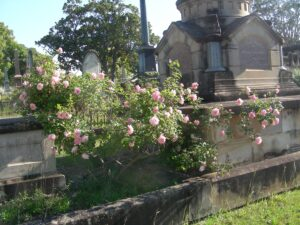 'Duke of York' at Rookwood Cemetery