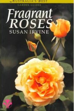 Fragrant Roses Susan Irvine