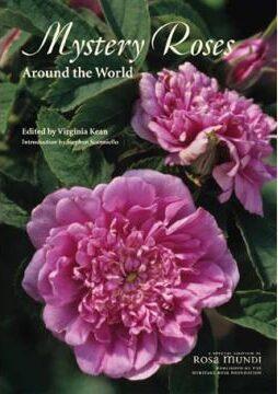 Mystery Roses Virginia Keane