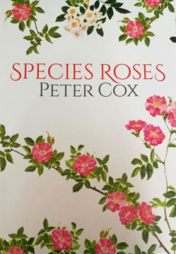 Species Roses Peter Cox