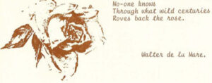 Yesterday's Roses Quote