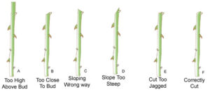 Pruning Examples